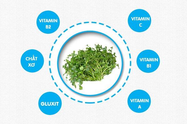 Rau cải xoong là loại rau chứa nhiều vitamin quan trọng cho cơ thể