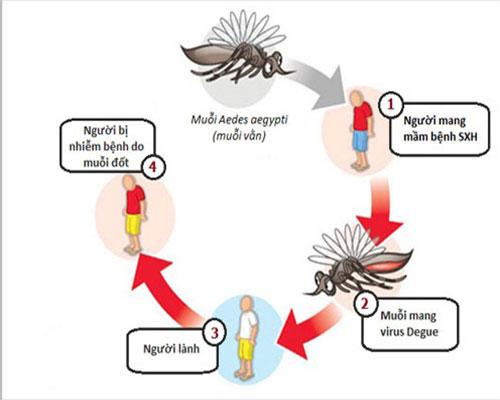 Cách phát hiện triệu chứng sốt xuất huyết ở trẻ em và cách điều trị tại nhà?