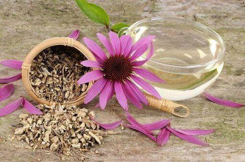10 chất kháng sinh tự nhiên tốt hơn thuốc