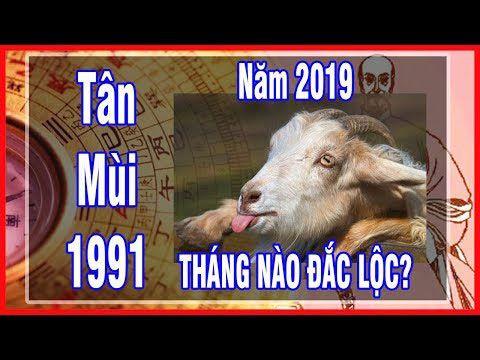 Tử vi 12 tháng của tuổi Tân Mùi 1991 năm 2019