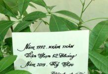 Tử vi 12 tháng của tuổi Nhâm Thân 1992 năm 2019