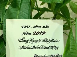Đinh Mão 1987 tử vi năm 2019