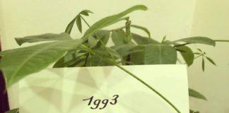 1993 quý dậu - Thiên bẩm trong công việc