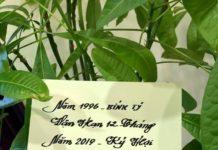 Tử vi 12 tháng của tuổi Bính Tý 1996 năm 2019